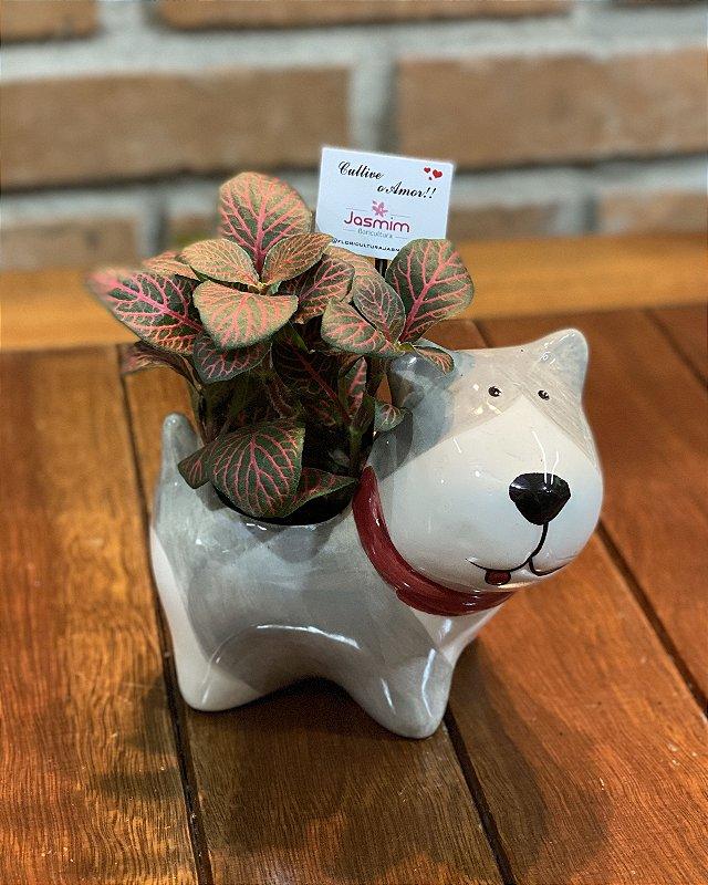 Cachorro Louça Cinza P + Fitônia