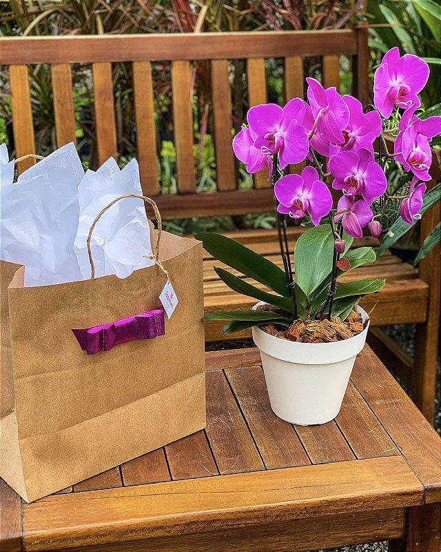 Orquídea Phaleanopsis Marcelo Almeida Pink