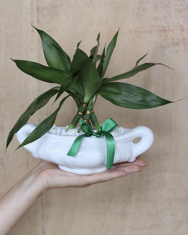 Bambu da Sorte Vaso cerâmica