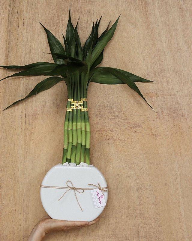Bambu da Sorte Vaso Cerâmica Lua