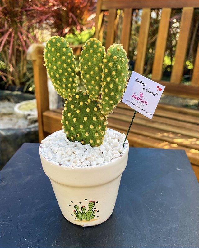 Mini Cacto Mikey em Vaso de cactos
