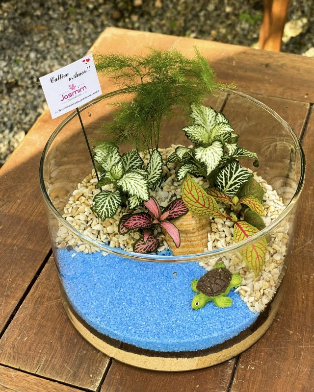 Arranjo Mini Jardim com tartaruga