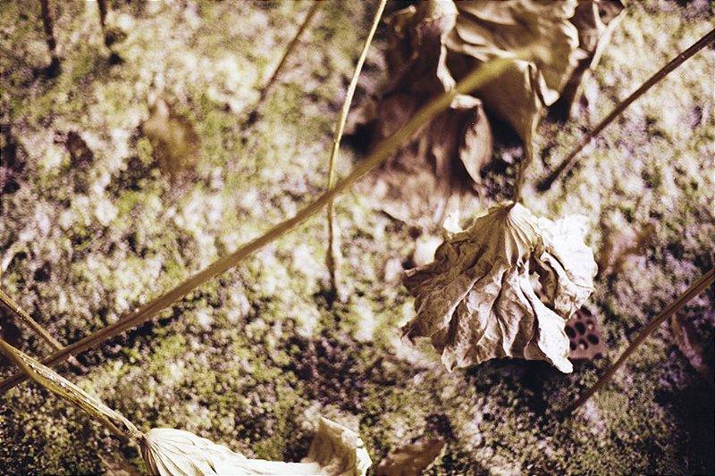 11 Fotografia . Lotus 1 . Clara Figueiredo