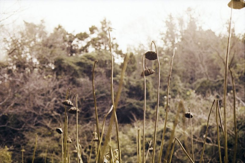 12 Fotografia . Lotus 2 . Clara Figueiredo