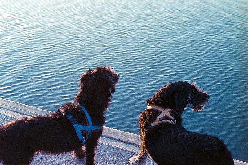 36 Fotografia . Cães . Fernanda Corsini