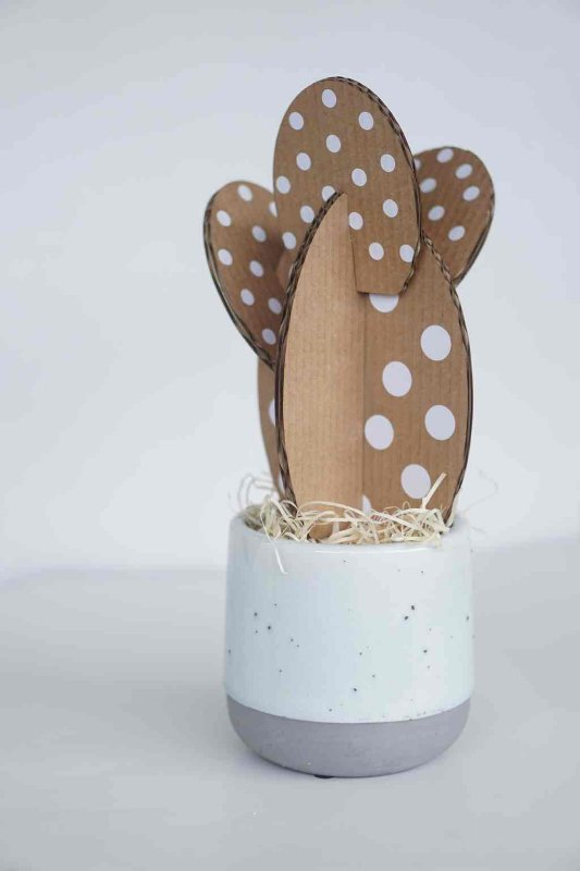Cactus de papelão Opuntia