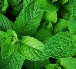 Aroma de hortelã (apenas para convites em papel reciclado)