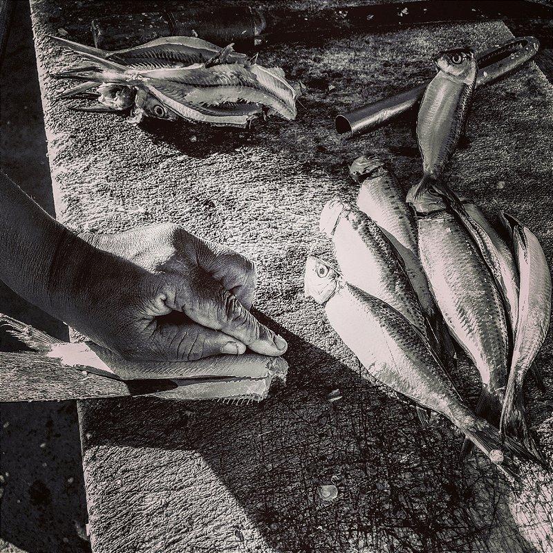 Tratando peixe - P&B  • ©Holanda Cavalcanti