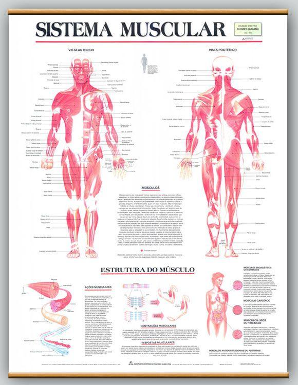 Mapa Sistema Muscular