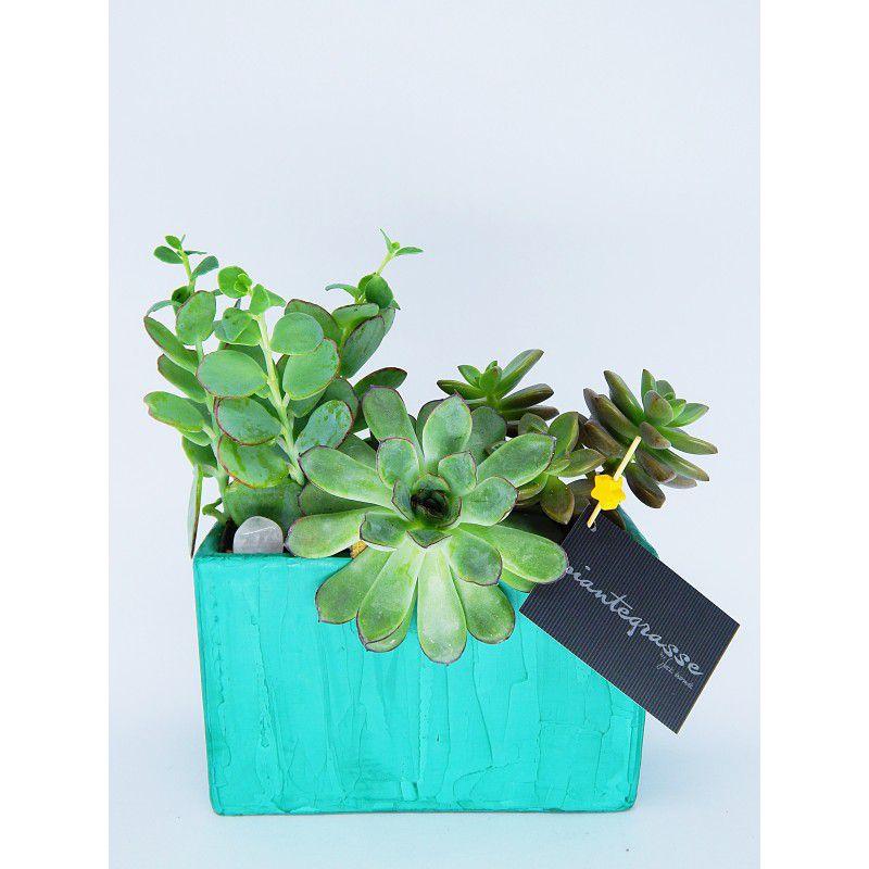 Mini jardineira com cactos e suculentas