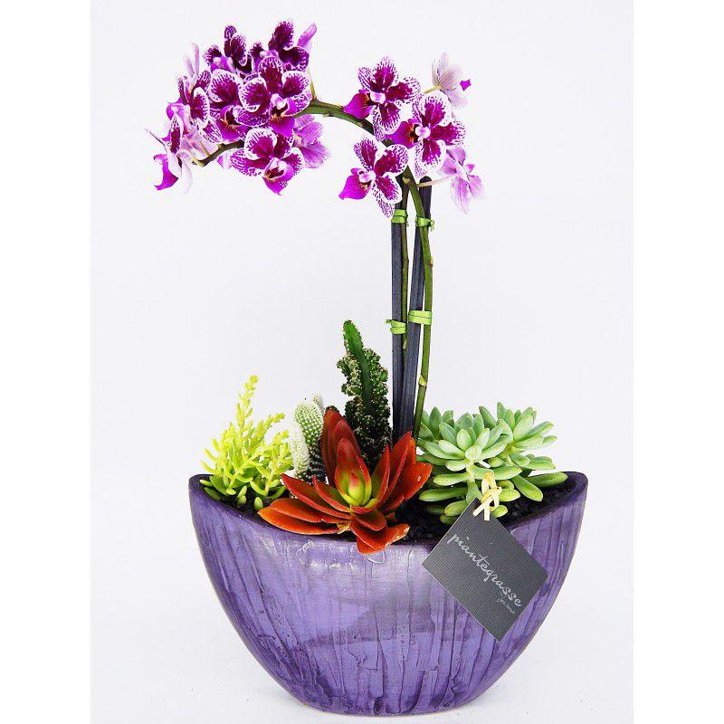 Arca Mix de cactos e suculentas com orquídea