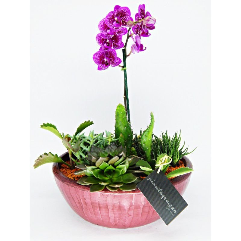Cachepot mix de cactos, suculentas e orquídea