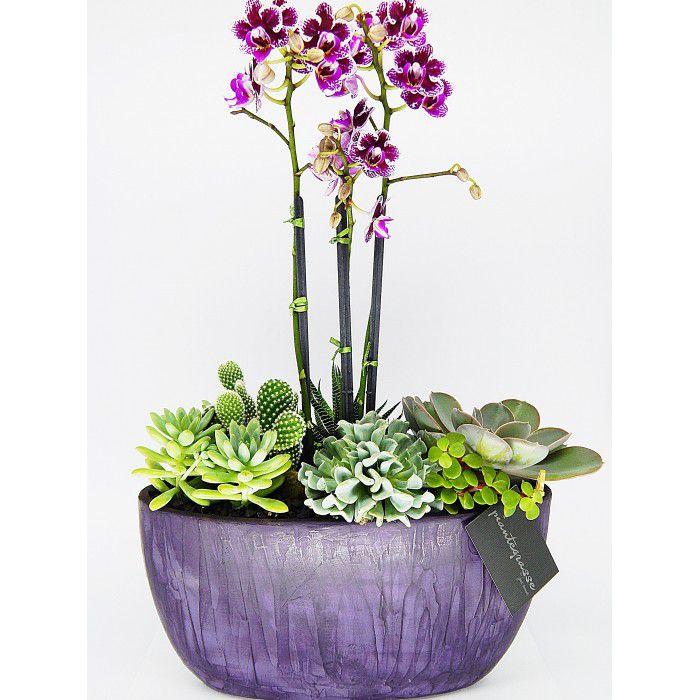 Cachepot oval com mix de cactos, suculentas e mini orquídeas