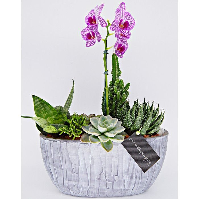 Cachepot oval com mix de cactos, suculentas e orquídea rosa