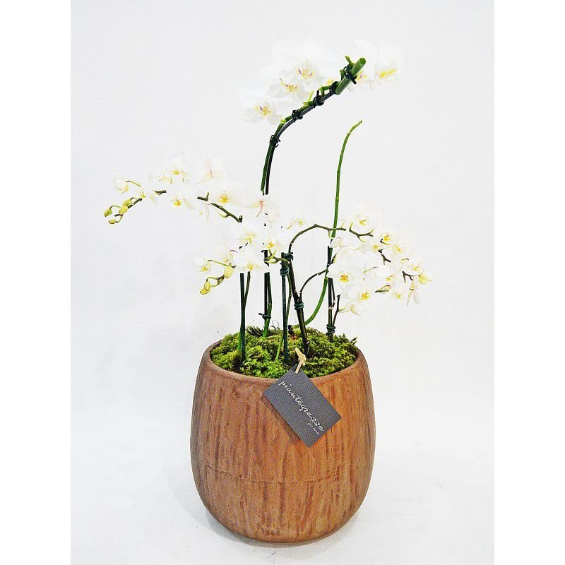 Vaso bojudo grande cerâmica com mini cactos, suculentas e orquídeas brancas
