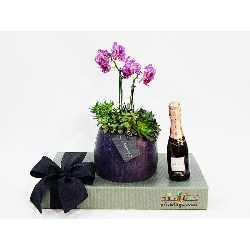 Kit Bojudo cerâmica com cactos, suculentas e orquídea + Chandon rosé baby