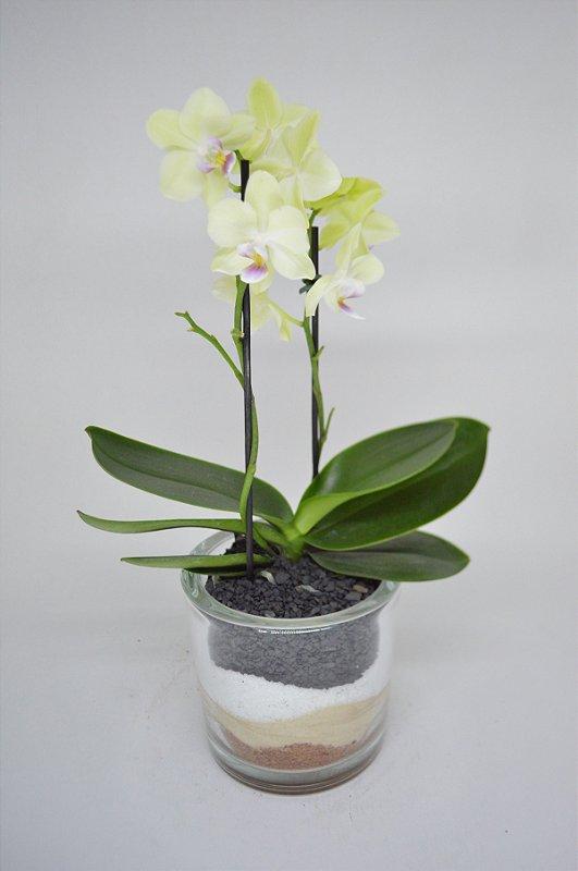 Terrário cilindro de vidro com Orquídea