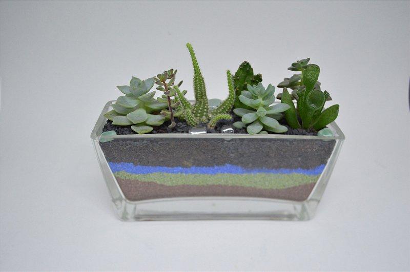 Mini floreira com arranjo de Cactos e Suculentas