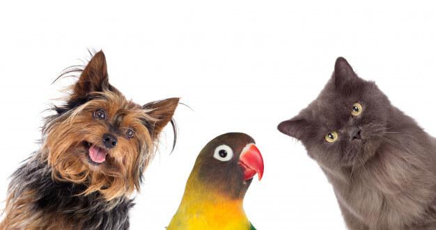 pet shop virtual